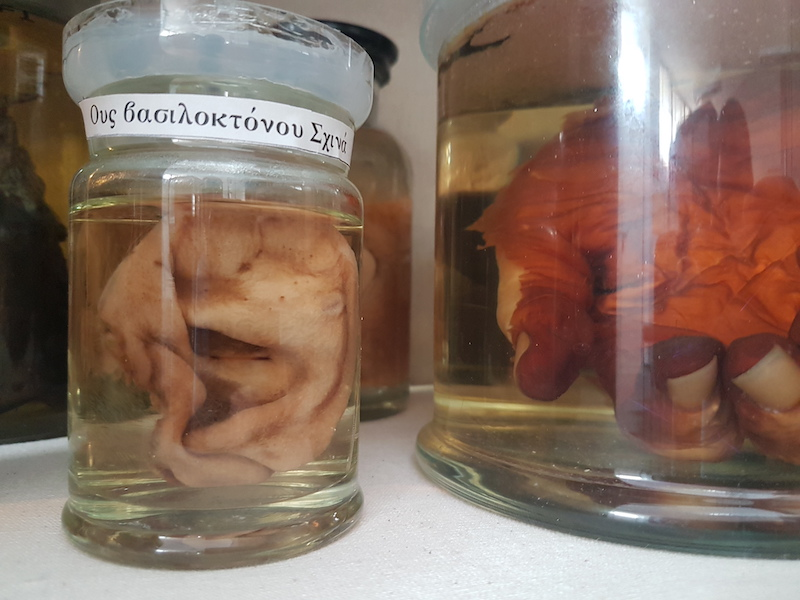 Several glass jars that contain ears