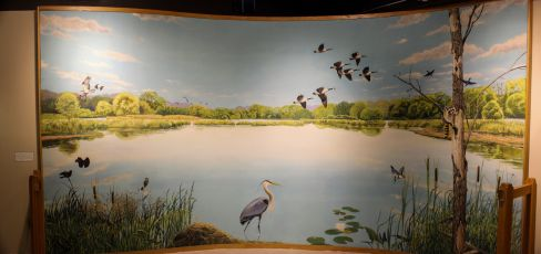 The wetland mural in the Hall of Animal Diversity