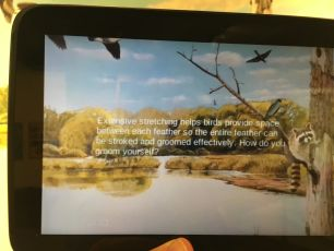Augmented bird with interpretation