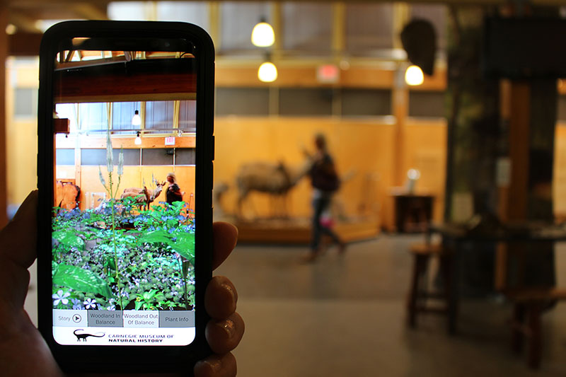 Figure 1: AR Perpetual Garden App, showing the Woodland in Balance Scenario visualization interacting with the White-tailed Deer and Predator Diorama Exhibit inside
