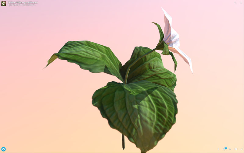 Figure 13: AR, VR, 3D Plant Model, Trillium (Trillium grandiflorum), demonstrating rotation and zoom