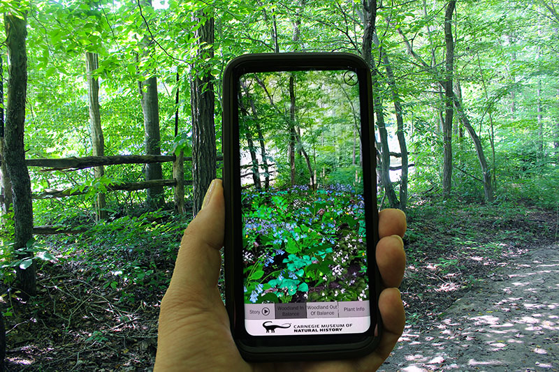 Figure 2: AR Perpetual Garden App, showing the Woodland in Balance Scenario visualization interacting with the outside