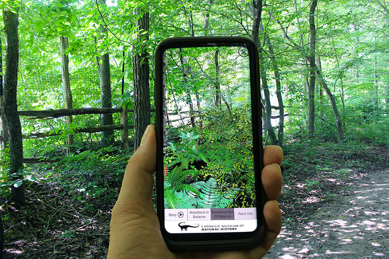 Figure 3: AR Perpetual Garden App Woodland out of Balance