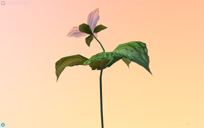 Figure 9: AR, VR, 3D Plant Model, Trillium (Trillium grandiflorum), demonstrating rotation and zoom